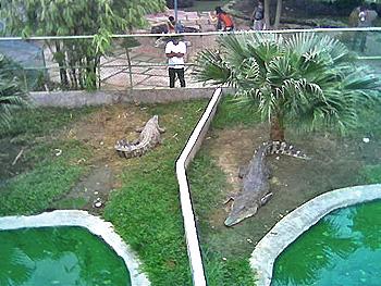 croc14.jpg