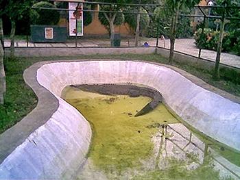 croc25.jpg